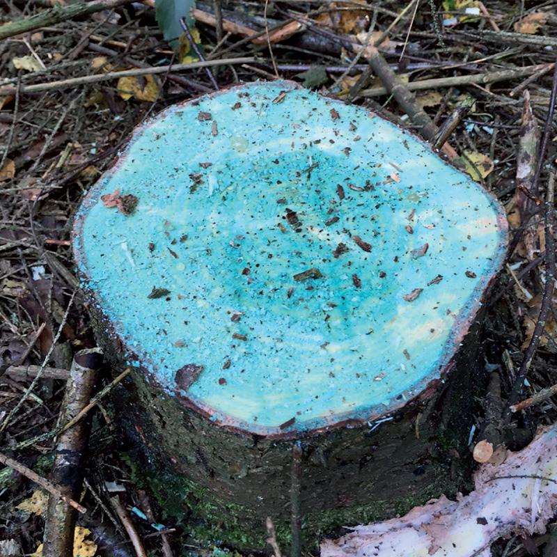 Rotstop, luonnonmukainen tapa torjua juurikääpää